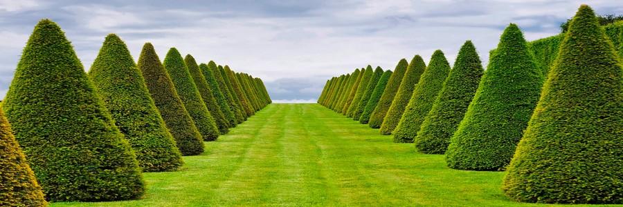 Озеленення Запоріжжя